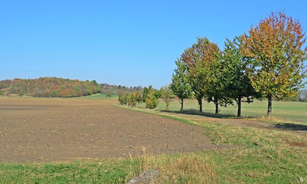 2018-10-14 Rast zw. Oppin + Niemberg (Sachsen-Anhalt) (4) Feldweg + Obstbäume - Feldweg beim Burgstetten (139 m), einer Porphyrkuppe nahe Niemberg